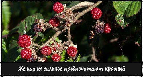Красные ягоды заметны